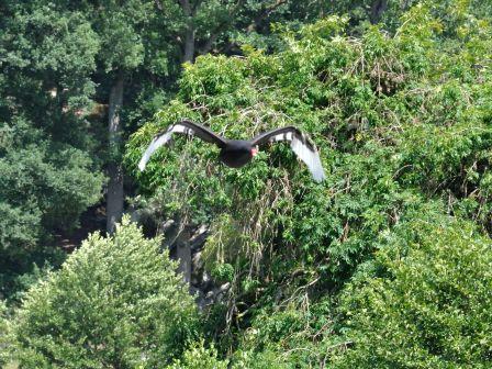 Sauvage les cygnes le blog des oiseaux for Parc sauvage 78